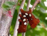 Eumorpha pandorus -- caterpillar 1