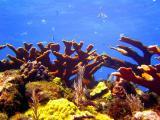 Deep Water Corals