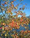 Indian Summer Run in Ann Arbor: U of M Arb and Gallup Park