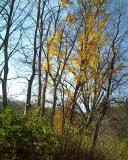 More stubbon trees