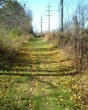 Last lingering leaves on the path