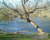 Mini Rapids