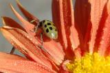 Flowers, Birds, Insects and Wildlife
