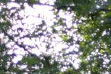 50-6-crop.jpg