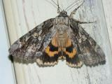 betrothed-underwing-7764.jpg