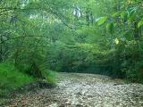 dry-creek.jpg