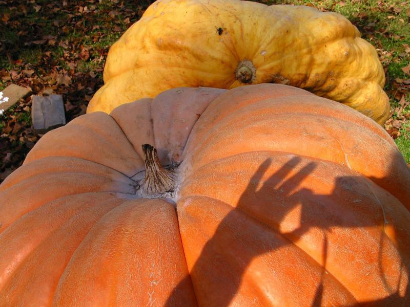 Giant Vermont Pumpkin