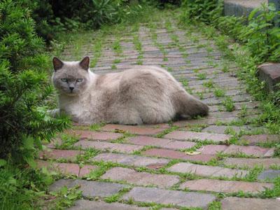 Miles, the gentle cat