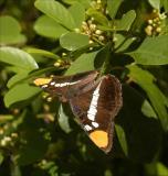 butterfly04_0940.jpg
