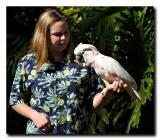 Maluccan Cockatoo