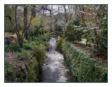 Stangate Camellia Garden - Aldgate