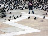 01_agirl_birds_ok_4w.jpg