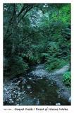 Soquel Creek