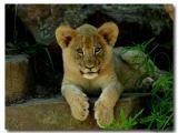 Fort Worth Zoo Layla_FWZ.jpg