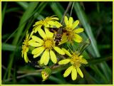 Hummingbird Moth and Praying Mantis