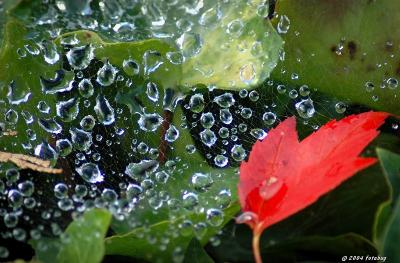Wet web and leaf