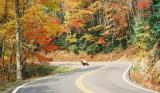 fall2003