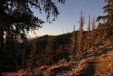 Schulman Grove trail