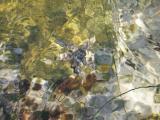 20030209 -- 4215.jpg  La Jolla Tidepools, San Diego