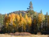Sierra Fall Colors