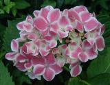 Favorite Flowering Shade Plants