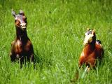 Beginning of horse collection2.jpg(511)