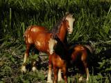 Mom  Foal3.jpg(498)