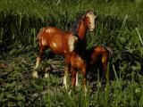 Mom  Foal4.jpg(490)