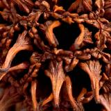 Sweetgum Seedpod 100% crop