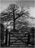 Langdale Farm Gate & Tree