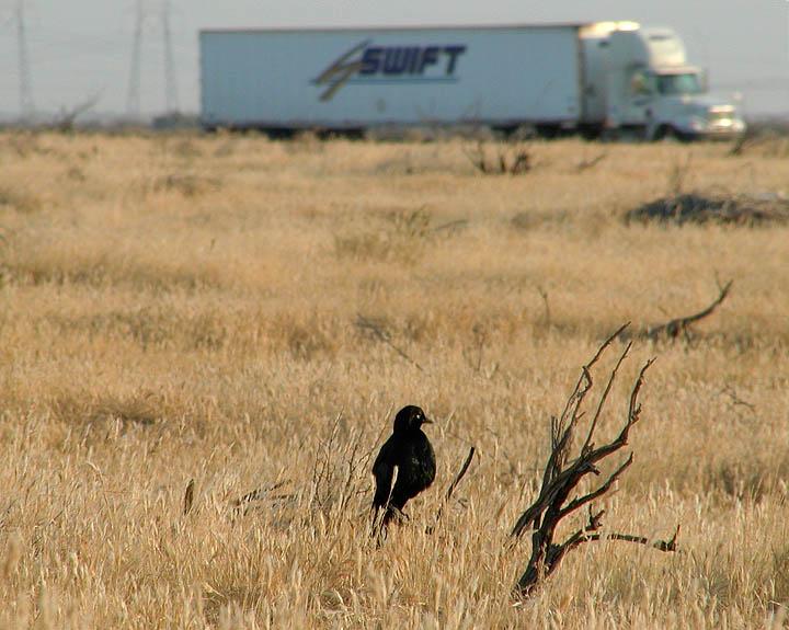 Blackbird and branch
