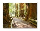 A Peaceful Morning WalkMuir Woods Nat'l Monument, CA
