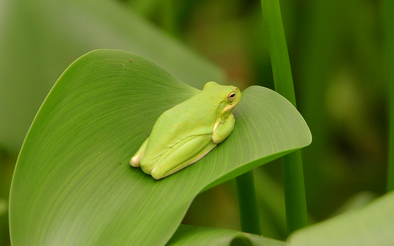 treefrog1.jpg