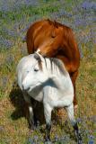 Horses Clare Valley SA