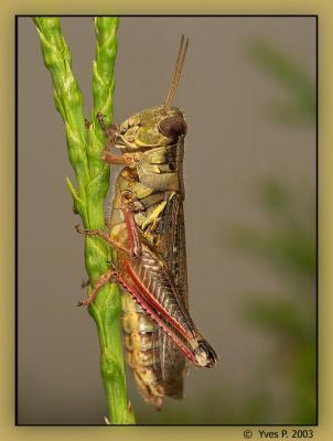 Grasshopper vertige ...