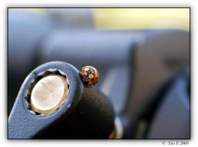 Ladybug Equipment envy ...