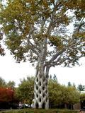 Basket Tree 03.jpg