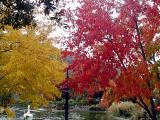 Bonfante Fall Colors 03.jpg
