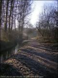 Chemin zebré de soleil. Bruxelles. Décembre 2004.