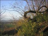 Vue sur l'infini. Terril à Gilly, Charleroi. Novembre 2004.