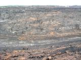 Miramar Area - Scorched Earth - 10-31-03