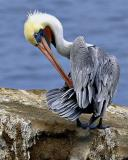 Other Water Birds: CLICK TO OPEN