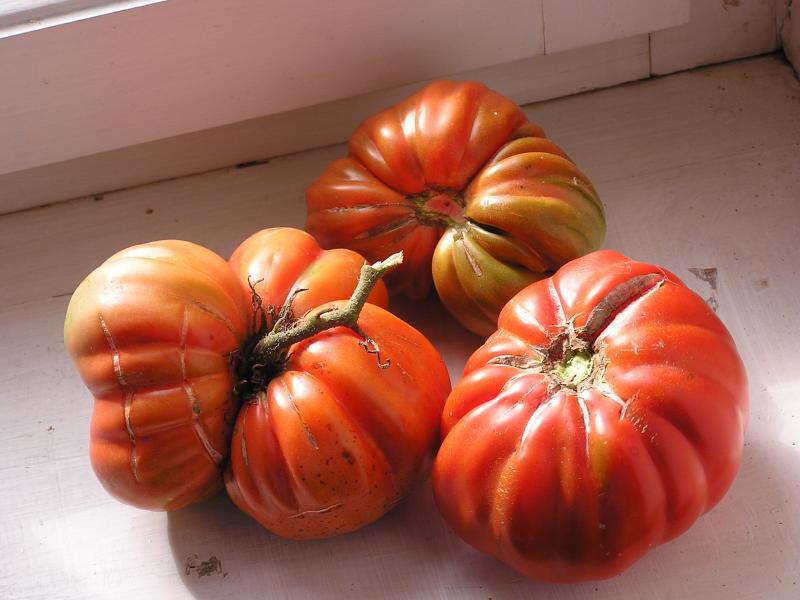 Tomatoes not pumpkins...mmmmm!
