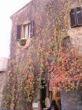 Bright autumn leaves festoon most walls