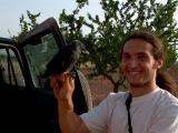 Jackdaw (Corvus monedula) Grajilla - Gralla