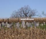 cemetery in a cornfield