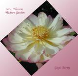 lotus_blossoms