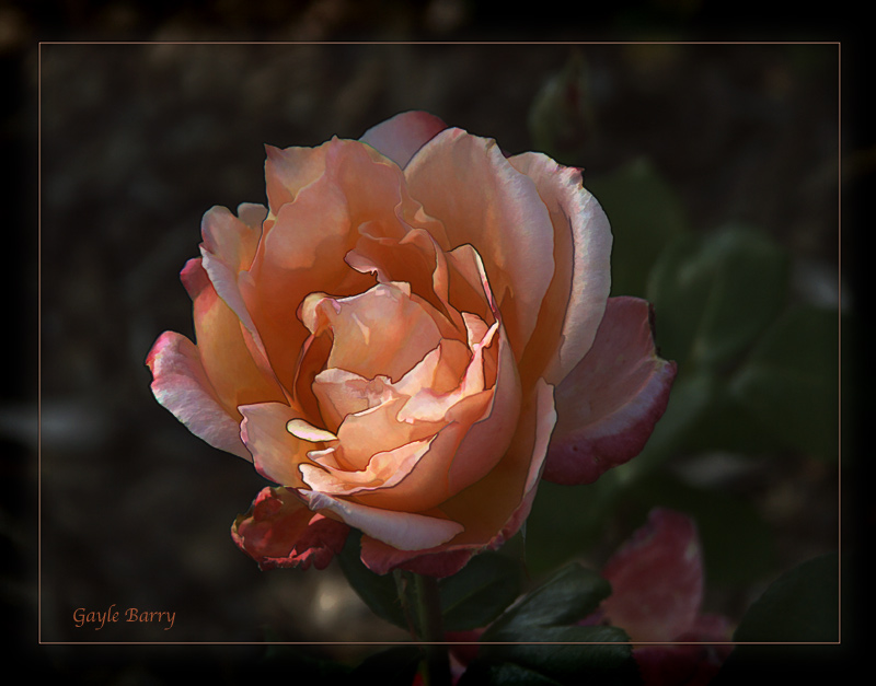 Lovely in Peach
