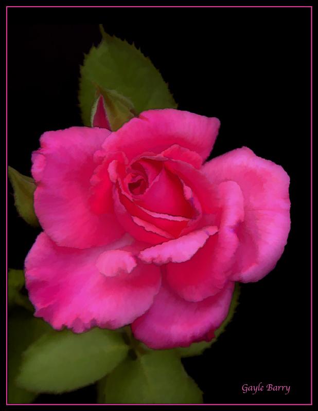 Matisse Rose
