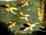 16.11=Aquarium .jpg